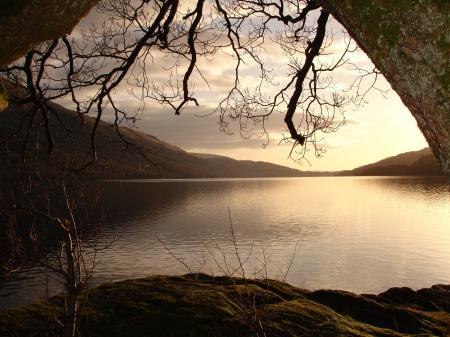 Фото озеро, свод, ветви