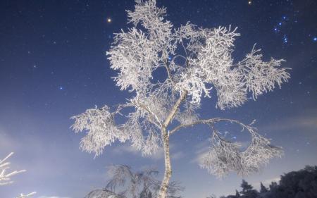 Фотографии природа, ночь, снежное дерево, иней