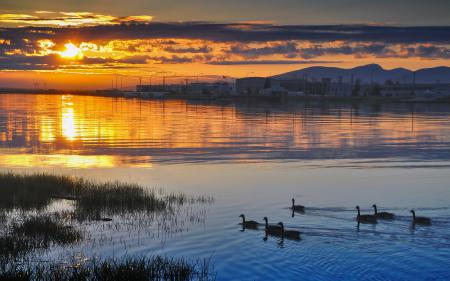 Заставки вода, птица, закат
