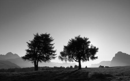 Обои пейзажи, дерево, деревья, фото
