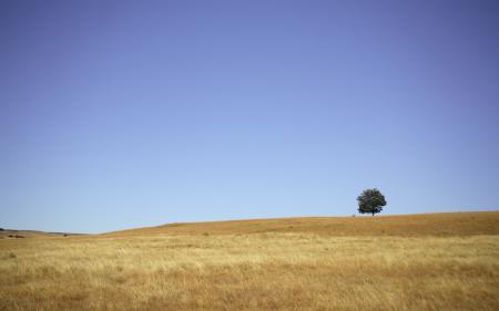 Обои пейзажи, фото, дерево, холмы