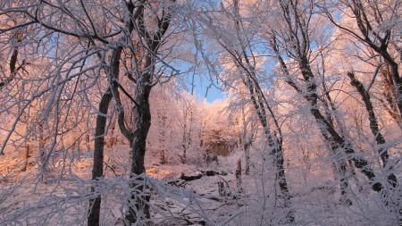Фото зима, природа, лес, деревья