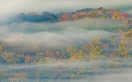 Картинки лес, туман, осень