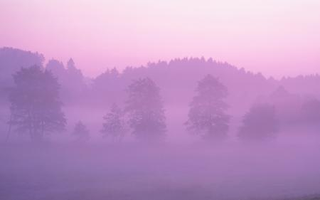 Обои лес, туман, розовый