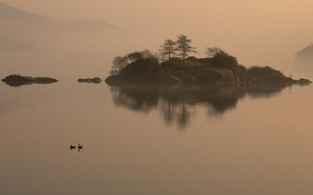 Фото озеро, остров, утки