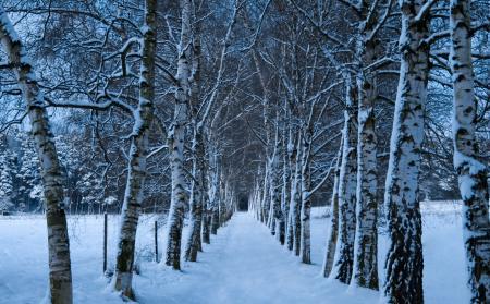Фото зима, снег, деревья, стволы