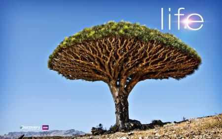 Фото life, tree, discovery