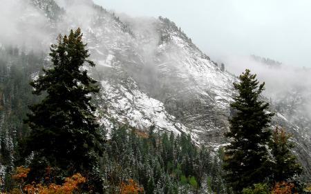 Фото горы, лес, туман
