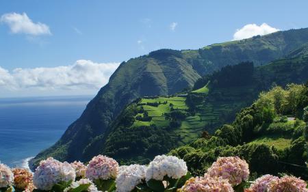 Обои горы, вода, цветы