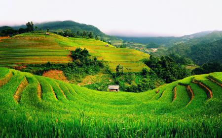 Фотографии Вьетнам, зеленые, поля, хижина