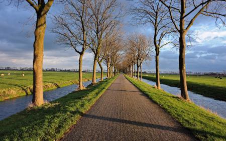 Фотографии дорога, деревья, канал, пейзаж