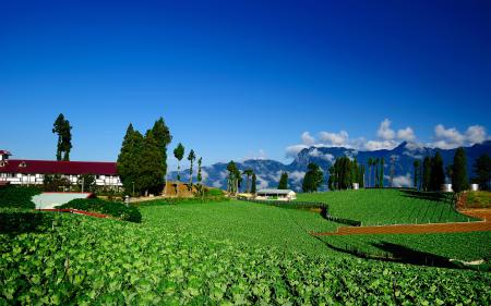 Обои дома, ферма, постройки, поля