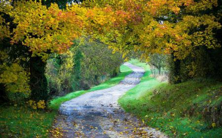 Фотографии дорога, деревья, пейзаж