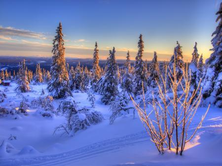Обои Norway, Норвегия, зима, ели