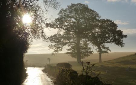 Заставки утро, поле, дорога, пейзаж