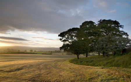 Картинки поле, дерево, природа, пейзаж