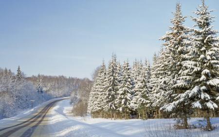Картинки зима, лес, деревья, дорога