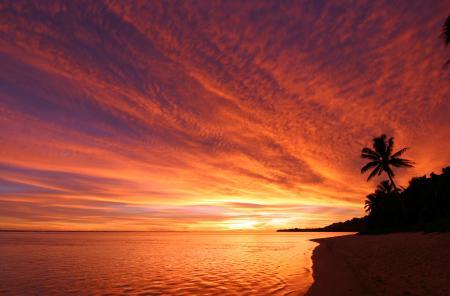 Фотографии море, небо, закат, пальма
