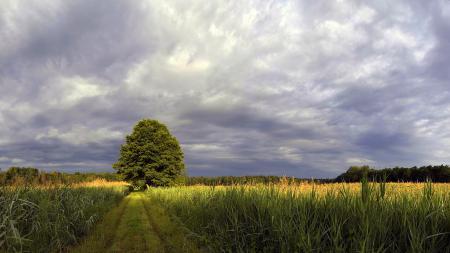 Фото поле, тропа, дерево, даль