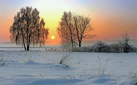Фото природа, солнце, зима, восход