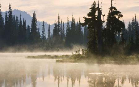 Фото лес, деревья, ели, силуэт