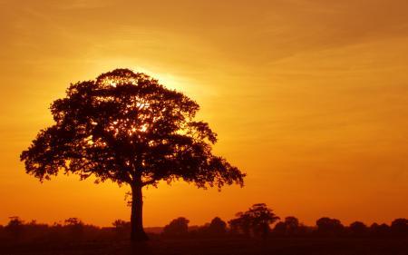 Обои дерево, крона, закат