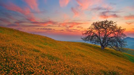 Обои поле, поляна, цветы, холмы
