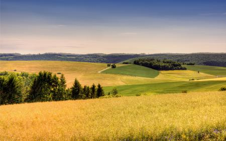 Картинки пейзаж, поле, небо, трава