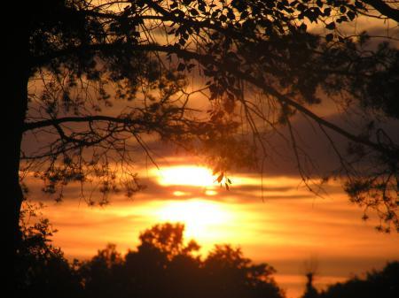 Картинки закат, солнце, листва, тени