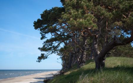 Картинки балтийское, море, солнце, сосна