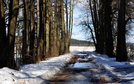 Картинки весна, spring, дерево, дорога