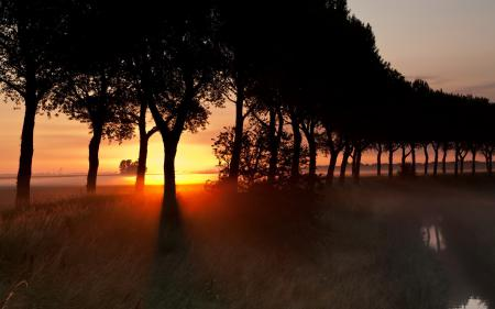Картинки закат, деревья, пейзаж