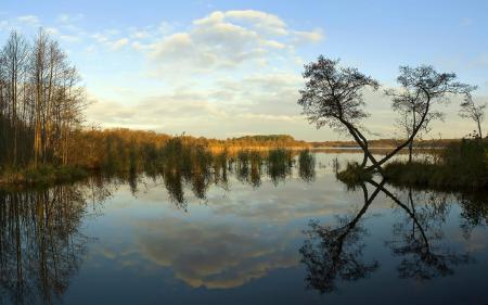 Фотографии природа, озеро, деревья, отражение