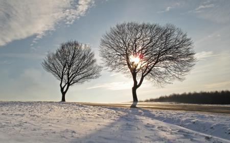 Фото деревья, дорога, небо, пейзаж