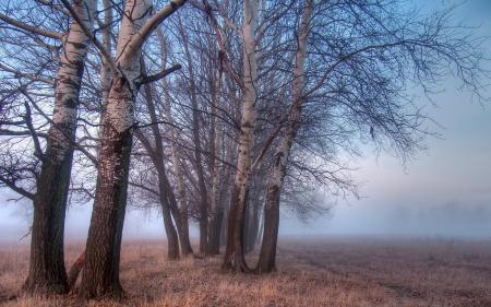Фотографии поле, деревья, туман, пейзаж
