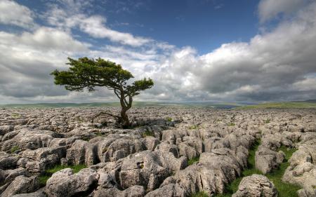 Обои поле, дерево, камни
