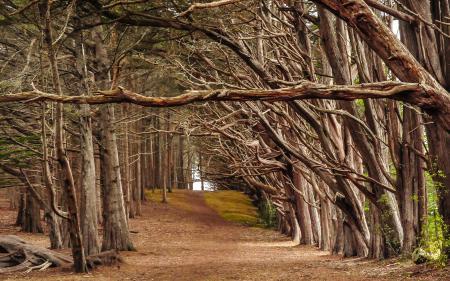 Фотографии деревья, дорога, природа, пейзаж