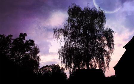 Заставки пейзаж, дерево, ночь, тень