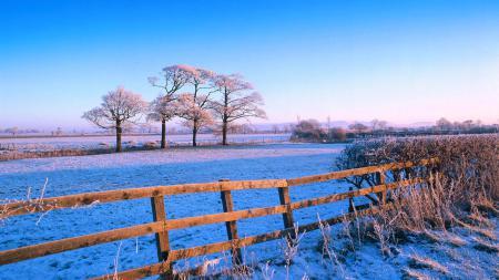 Фото небо, поле, деревья, забор
