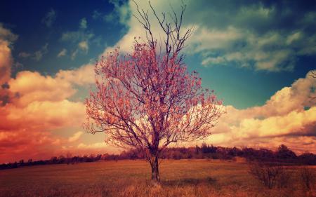 Фотографии дерево, пейзаж, облака, крона