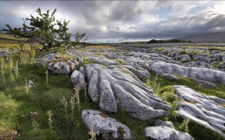 Фото поле, дерево, камни, пейзаж