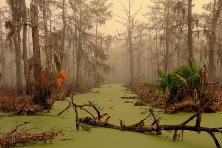 Картинки джунгли, вода, болото, деревья
