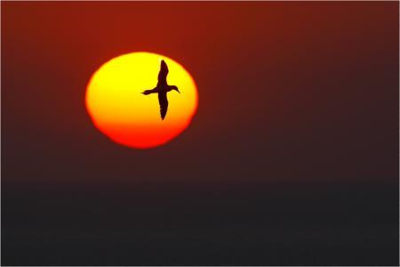 Картинки закат, восход, солнце, птица