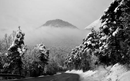 Фото пейзаж, снег, зима, лес