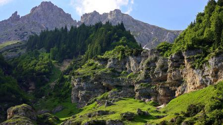 Обои горы, склон, деревья, мох