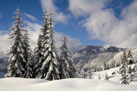 Фотографии зима, горы, снег, деревья