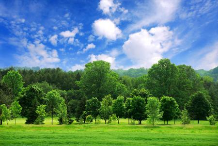 Обои пейзаж, красиво, лес, деревья