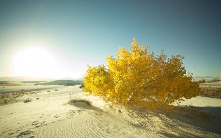 Фото пейзажи, фото, дерево, деревья