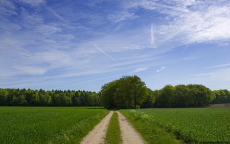 Фотографии дорога, лес, зелень, лето