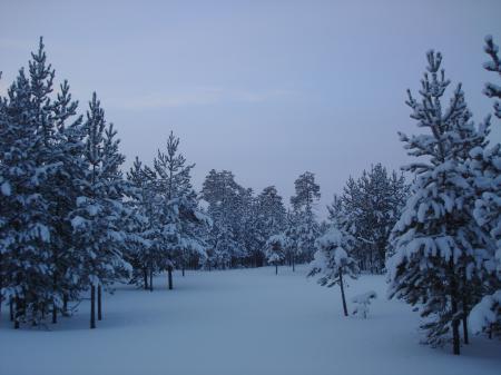 Заставки Лес, снег, деревья